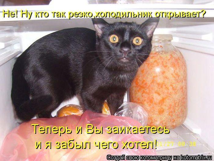 3180456_1352134028_1351836489_kotomatrix_01 (700x525, 69Kb)