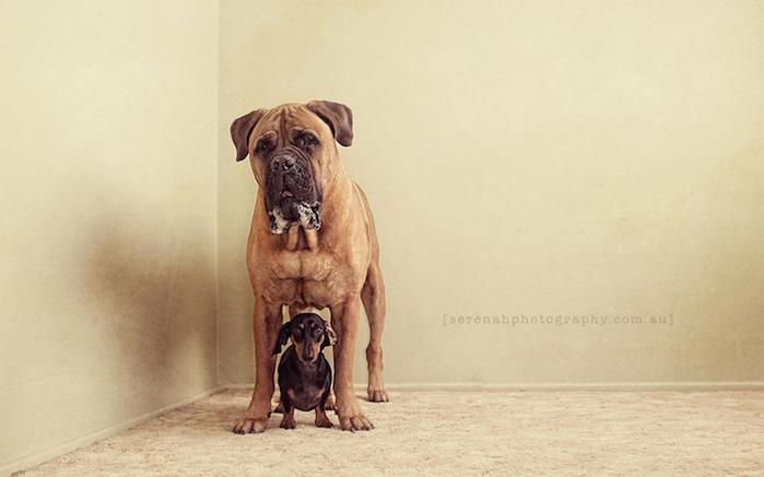 прикольные фото собак 2 (700x437, 149Kb)