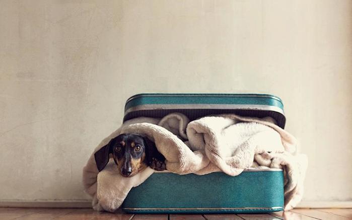 прикольные фото собак 7 (700x437, 149Kb)