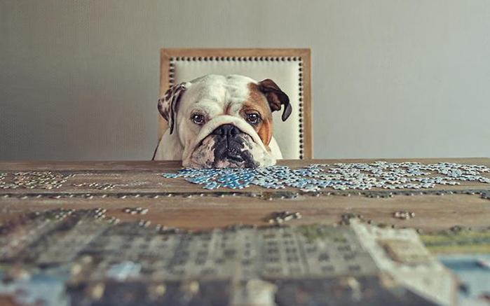 прикольные фото собак 8 (700x437, 166Kb)