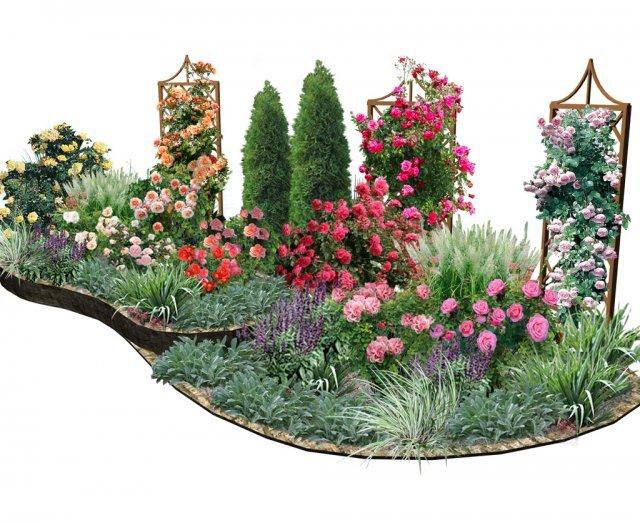 Устройство розария на садовом участке