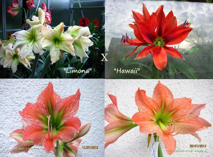 http://img0.liveinternet.ru/images/attach/c/7/96/695/96695744_LimanoaX_Hawaii.jpg