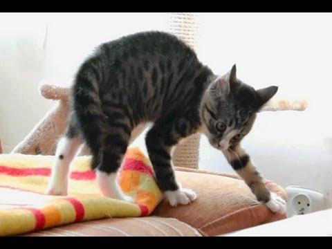 котенок никита