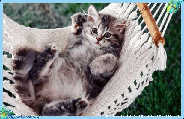 ...но рас спрашиваете то потружусь) Я очень люблю кроликов, маленьких собачек, щенков, кошек и котят да и вообще...