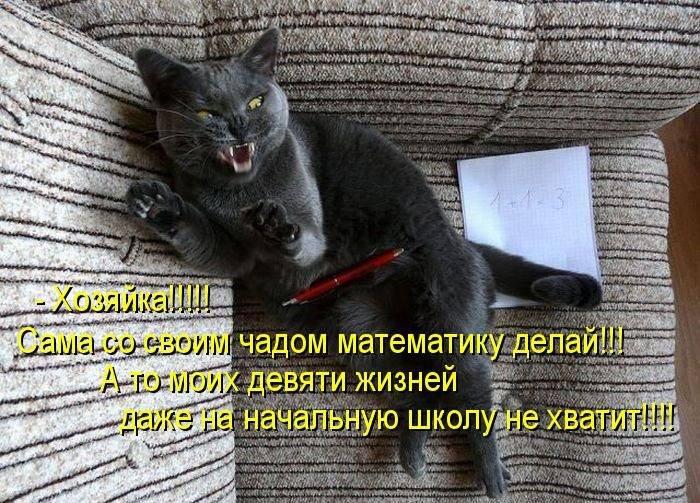 1311112023_1294850693_1293174753_kotomatrix_24 (700x503, 103Kb)