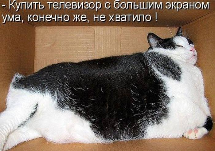1311112199_1294850690_1293174781_kotomatrix_15 (700x491, 68Kb)