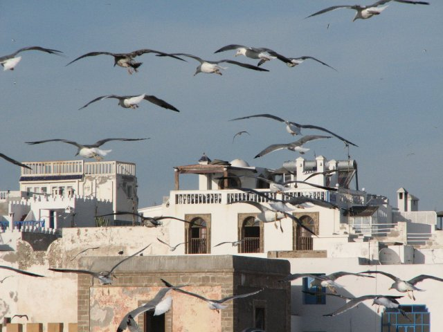 Essaouira (640x480, 58Kb)