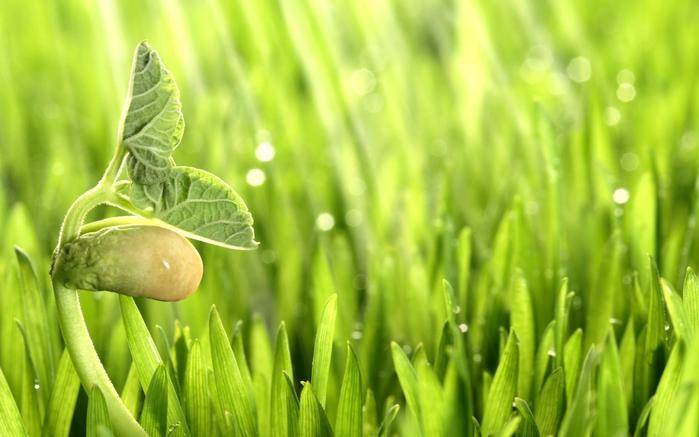 4613332_Nature_Plants_Plant_015594_ (700x437, 193Kb)