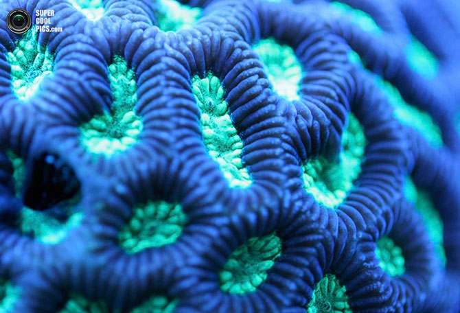 коралы фото 2 (670x456, 86Kb)