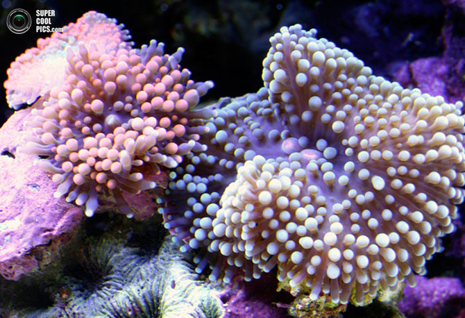 коралы фото 6 (670x458, 113Kb)