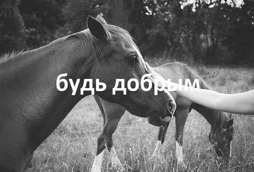4239794_qyUWsB14_5Y (500x338, 56Kb)