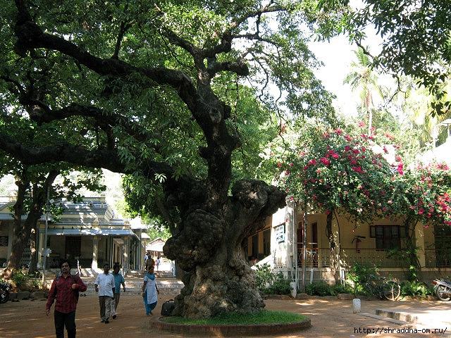 Индия, Тируваннамалай, ашрам Рамана Махарши, 2 (640x480, 393Kb)