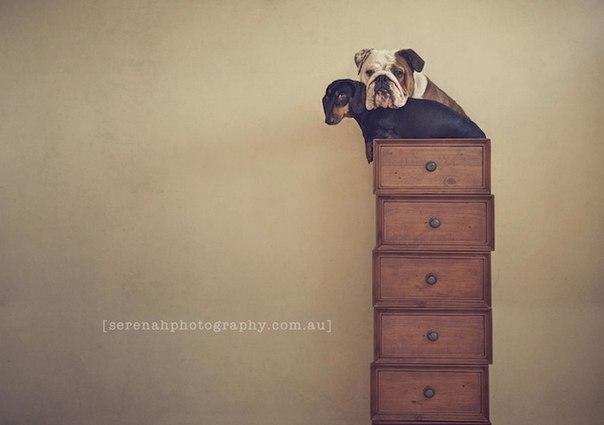 прикольные фото собак 3 (604x425, 27Kb)