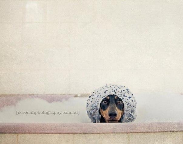 прикольные фото собак 5 (604x477, 37Kb)