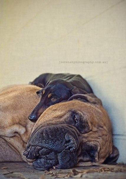 прикольные фото собак 8 (427x604, 56Kb)