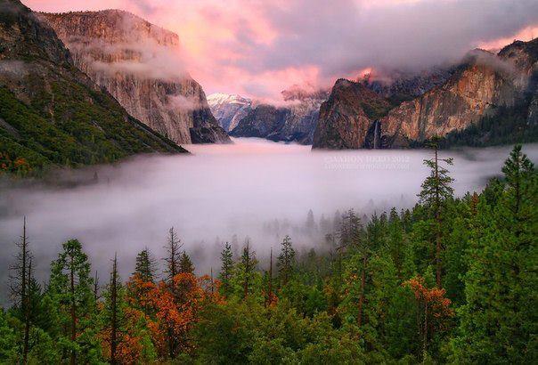 Утренний туман над лесом, Болгария (604x410, 51Kb)