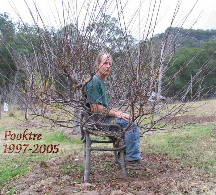 Pete_Cook_sitting_on_his_Pooktre_chair[1] (700x632, 96Kb)