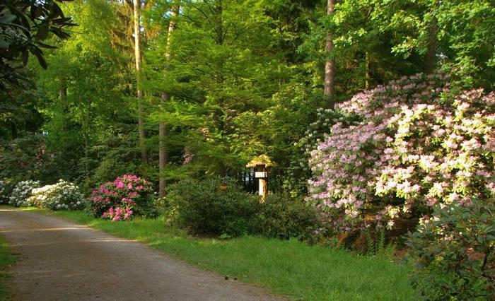 Рододендроновый парк-Westerstede Rhododendronpark. 38618
