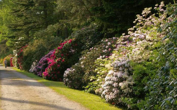 Рододендроновый парк-Westerstede Rhododendronpark. 12709