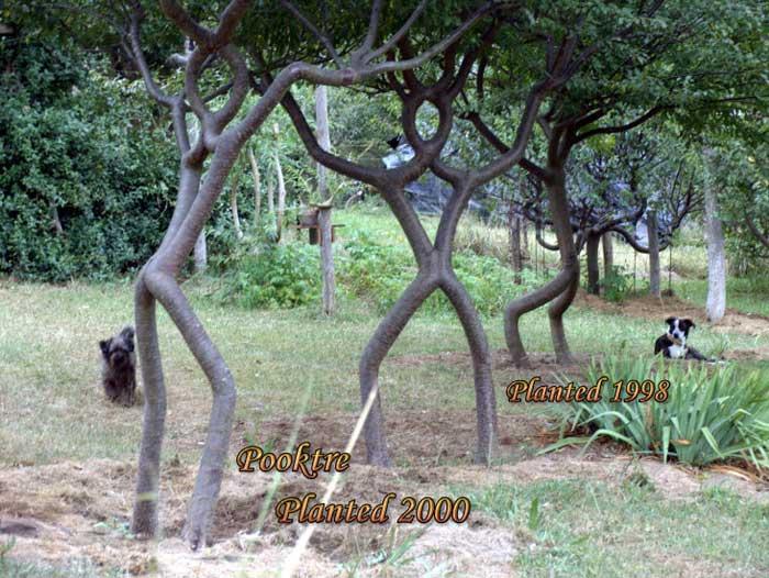 people-trees-06[1] (700x526, 74Kb)