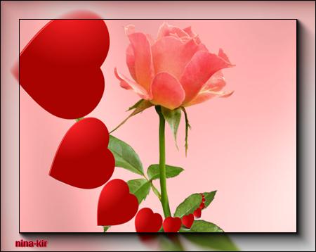 Роза (450x358, 116Kb)