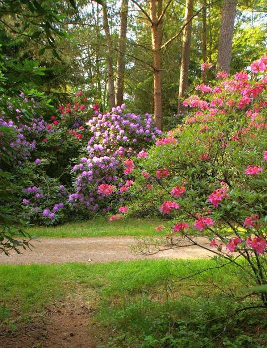 Рододендроновый парк-Westerstede Rhododendronpark. 97054