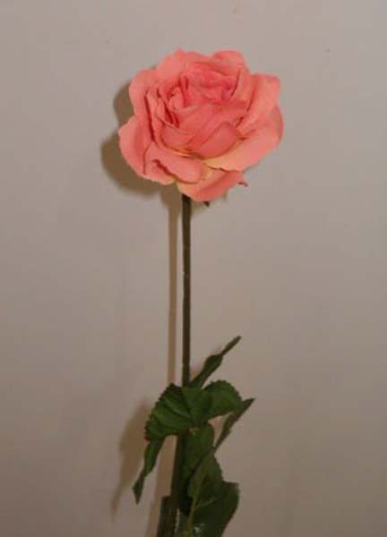 14-Rosa-open (432x600, 21Kb)