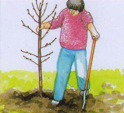 Как и любой садовод молодой человек сделал все чтобы 94