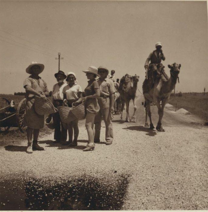8 Еврейские рабочие восстанавливают дорогу в Газе. 3 июля (685x700, 72Kb)