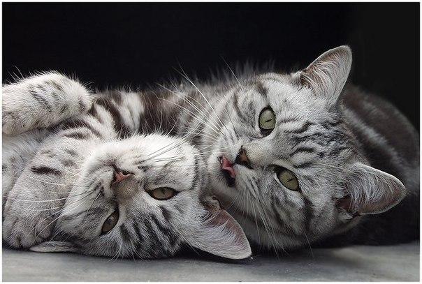 интересное о кошках/1359618593_lechebnuye_svoystva_koshek_1 (604x407, 64Kb)