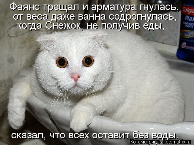 kotomatritsa_7k (640x480, 64Kb)