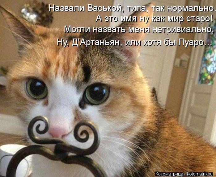 kotomatritsa_Aw (700x574, 69Kb)