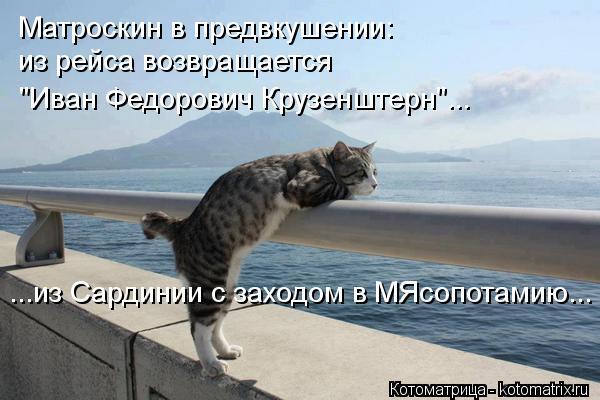 kotomatritsa_DU (600x400, 43Kb)