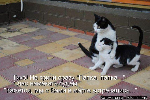 kotomatritsa_Pm (640x428, 51Kb)