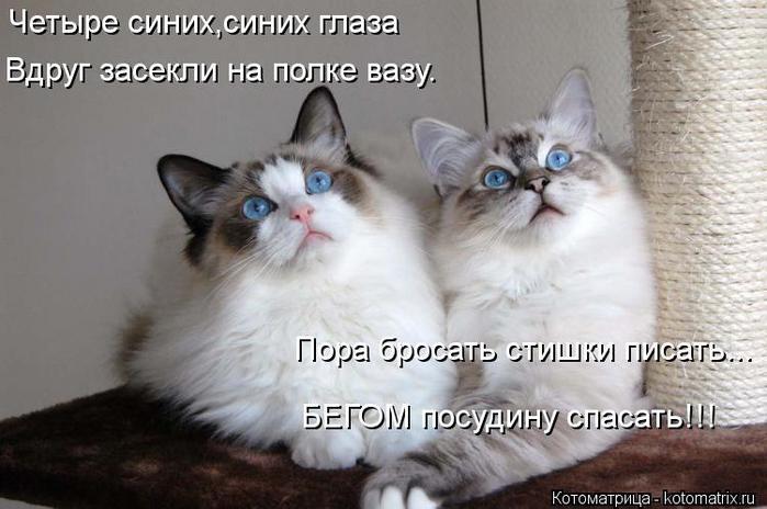 kotomatritsa_Qp (700x464, 48Kb)