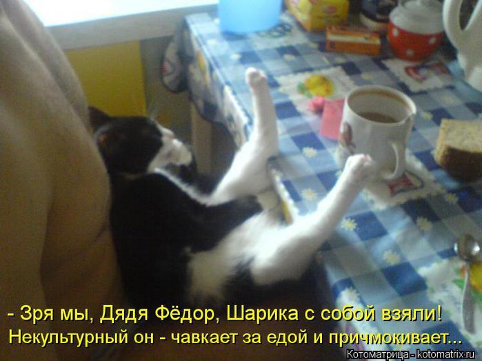 kotomatritsa_Ud (700x524, 49Kb)