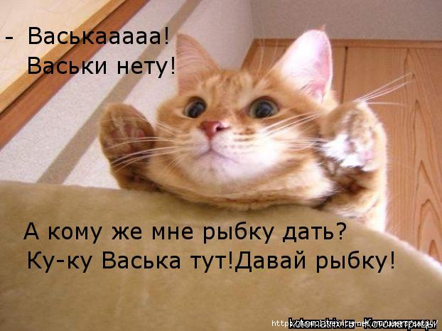 kotomatritsa_mP (622x466, 138Kb)
