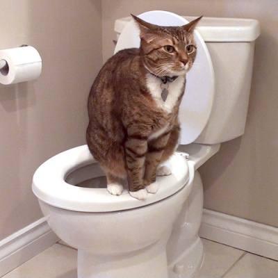 кошка-и-туалет (400x400, 16Kb)