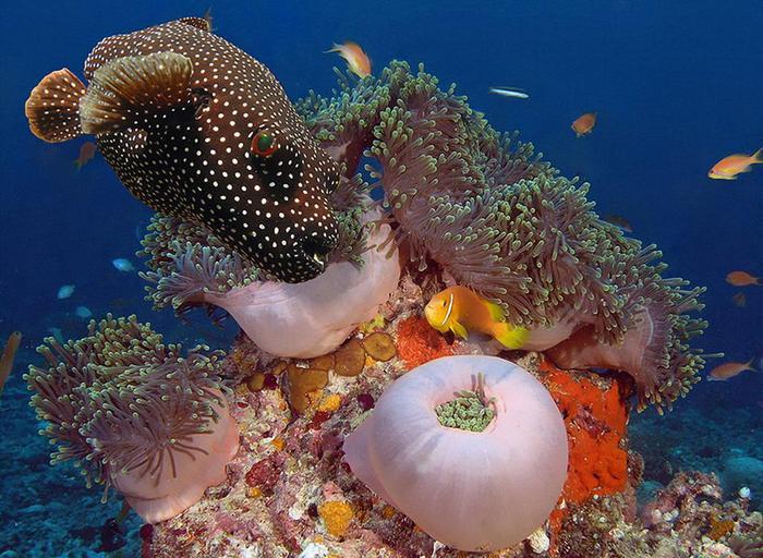 Итак подводный мир красного моря…