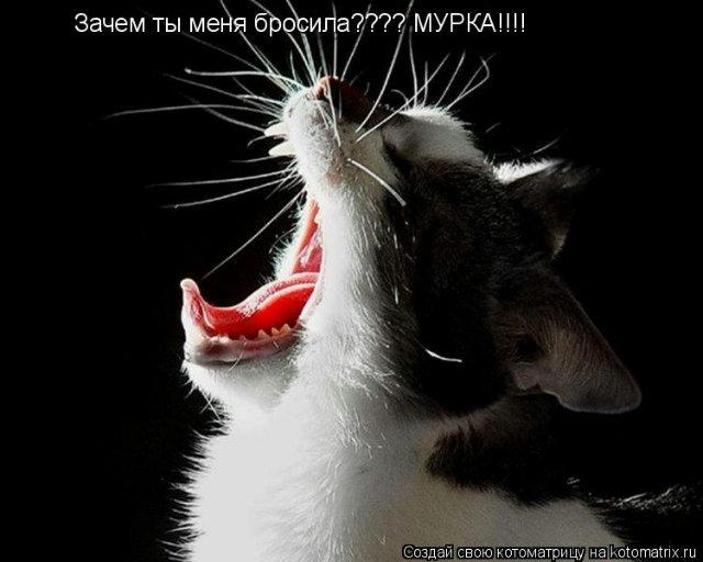 http://img0.liveinternet.ru/images/attach/c/7/96/918/96918440_large_4330839_897517.jpg