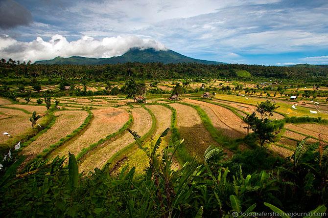 рисовые поля фото 1 (670x446, 120Kb)