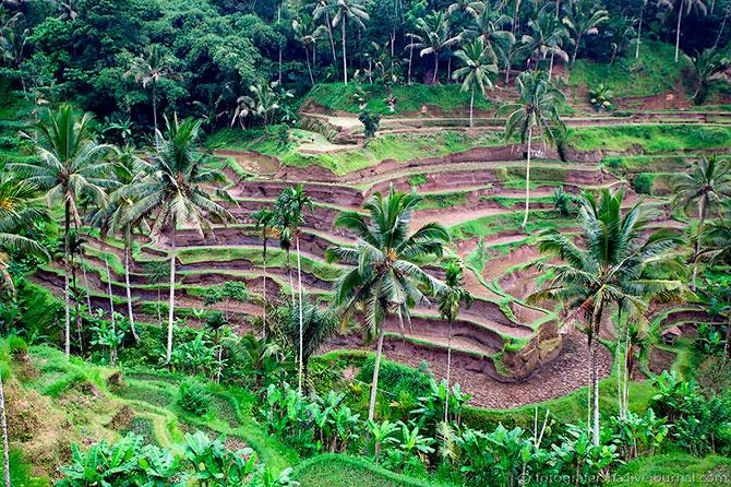 рисовые поля фото 3 (670x446, 190Kb)