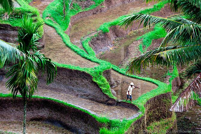 рисовые поля фото 5 (670x446, 174Kb)