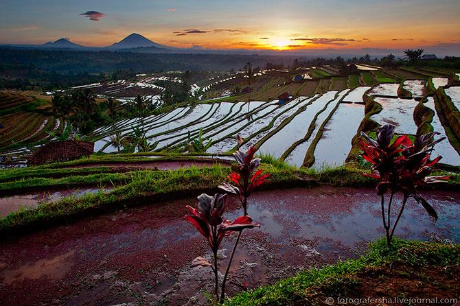 рисовые поля фото 11 (670x446, 123Kb)
