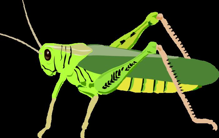 кузнечик (700x441, 94Kb)