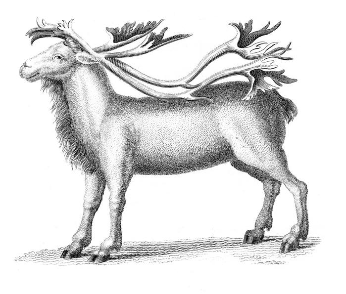reindeer-graphicsfairy006sm (700x595, 187Kb)