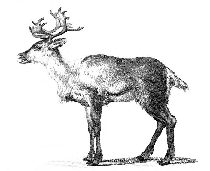 reindeer-graphicsfairy007sm (700x569, 131Kb)