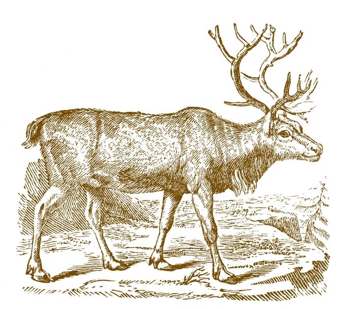 ReindeerVintage-GraphicsFairy-brn (700x630, 311Kb)