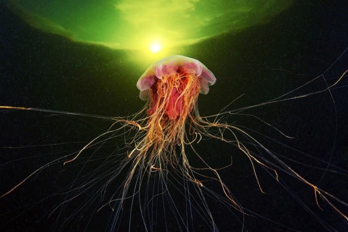 морские организмы фото 5 (700x466, 73Kb)