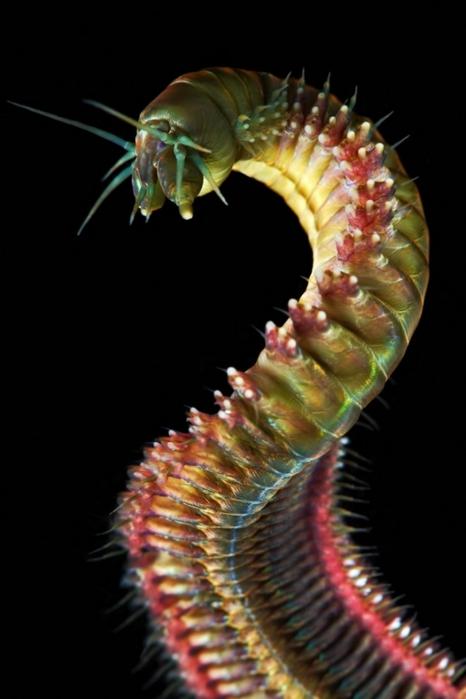 морские организмы фото 12 (466x700, 138Kb)